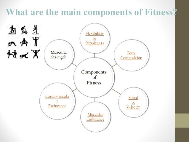 Physical Fitness Factors